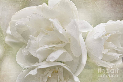Mock Orange by Cindi Ressler