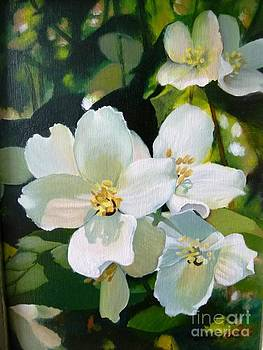 Mock orange by Linda Hunt
