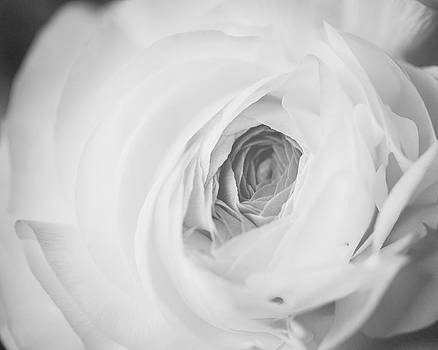 Lisa Russo - Modern Ranunculus in Black and White