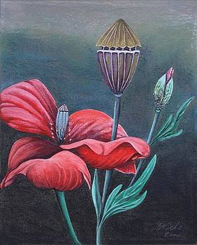 Mohn by Gertrude Scheffler