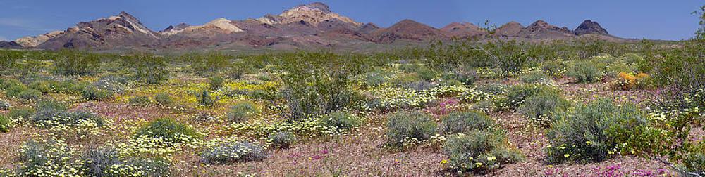 Mojave Desert Floral Display by Jennifer Nelson