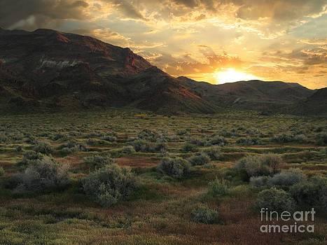 Stu Shepherd - Mojave Desert Spring Glory