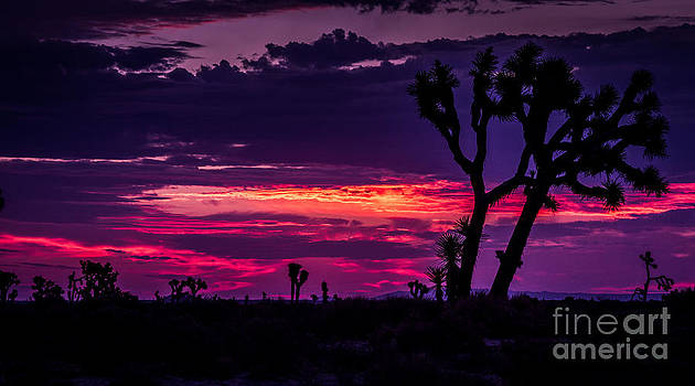 Mojave Desert Sunrise by Pam Vick