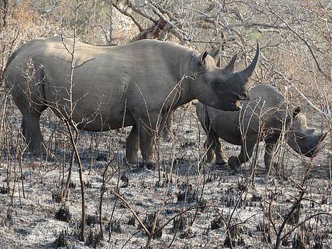 Mom and Me Rhinos by Yelnats TM