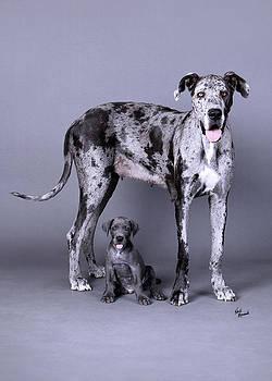 Mom and Son Great Danes by Heidi Marcinik