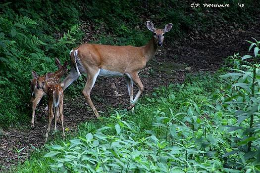 Momma and Babies by Carolyn Postelwait