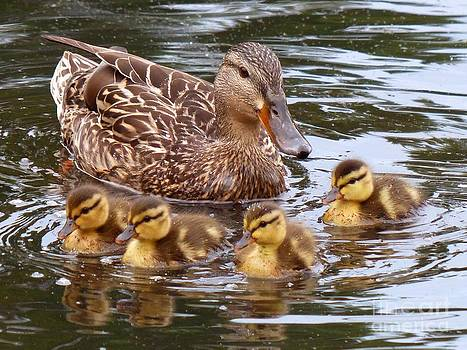 Christine Stack - Momma and Baby Mallards