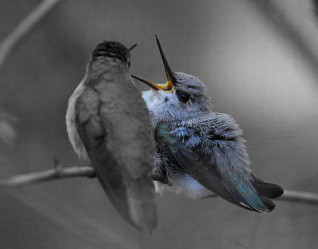 Momma hummingbird feeding baby by Old Pueblo Photography