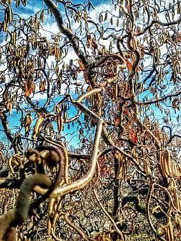Momma's Tree Again Again by Dustin Soph