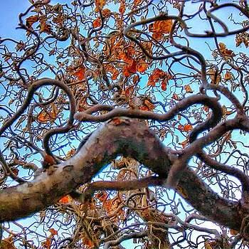 Momma's Tree Again by Dustin Soph