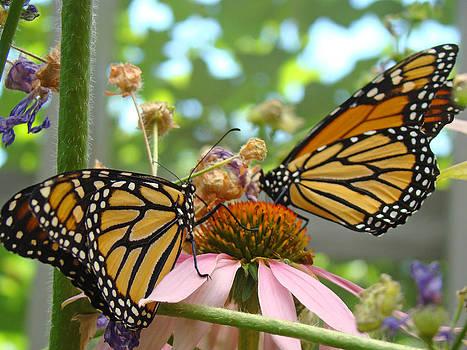 Baslee Troutman - Monarch Butterflies Art Prints Butterfly Nature
