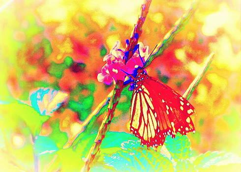 Monarch Butterfly  by David Mckinney