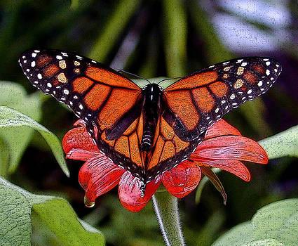 Monarch Butterfly by Wayne Ritt