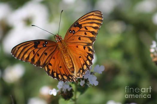 Monarch Glory by LC  Linda Scott