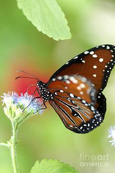 Monarch I by Pamela Gail Torres