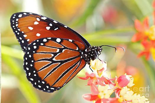 Monarch II by Pamela Gail Torres