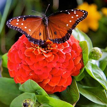Monarch by Joe Urbz