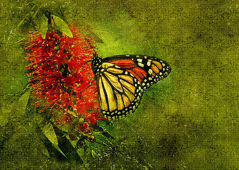 Monarch by Kelly Rockett-Safford