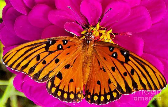 Monarch Majesty  by Annette Allman
