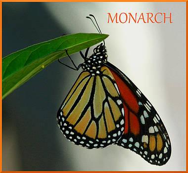 Monarch Mania by April Wietrecki Green