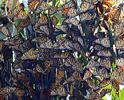 Monarch Mosaic by AJ  Schibig