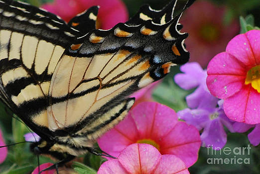 Monarch by Robin Hassler