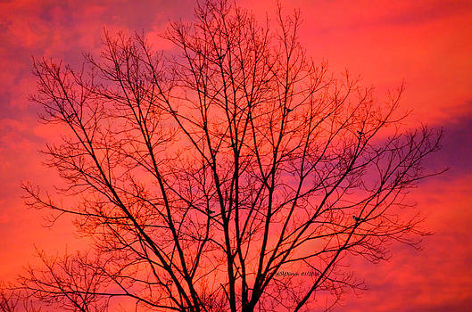 Monday Sunrise by Sheila Noren