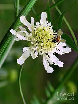 Monet's Garden Bee. Giverny by Jennie Breeze