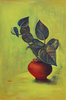 Usha Shantharam - Money Plant - Still Life