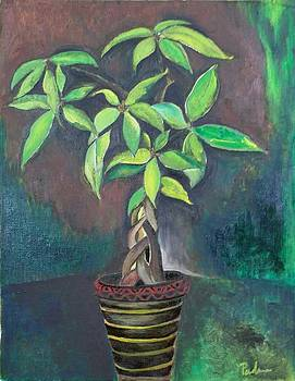 Money Tree by Padma Prasad