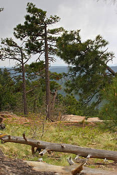 Mongollon Rim Country by Gail Maloney