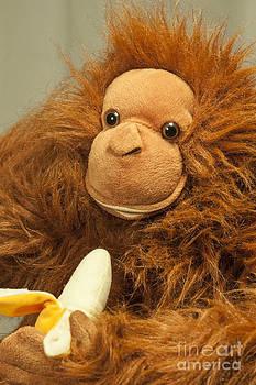 Monkey Business by Donald Davis