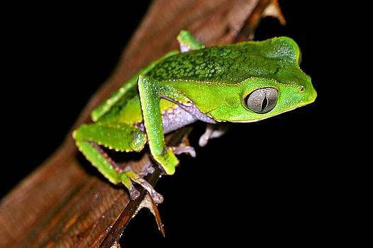 Monkey frog by Liudmila Di