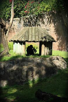 Monkey Hut by Mandy Shupp