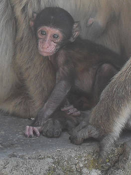 Monkey Love by David Otter