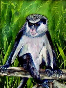 Susan Duxter - Monkey of Granada