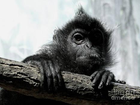 Scott B Bennett - Monkey round