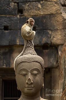 Monkey sitting perched on buddha head by Tosporn Preede
