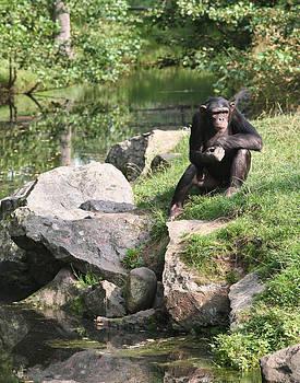 Dreamland Media - Monkey Thoughts