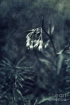 Monochromatic Bluebells by Priska Wettstein