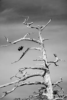 Monochrome Snag by Russell Christie