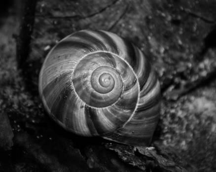 Monochrome Swirl by Mary Zeman