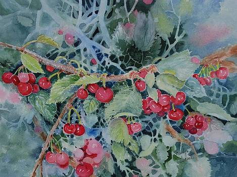 Montana Cherries by Marilyn  Clement