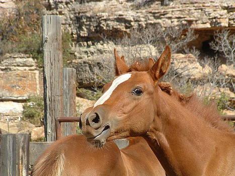Montana Horses by Steffi Pilz