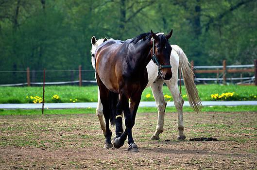 Nicole Frischlich - Monter sur un cheval