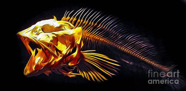 Gregory Dyer - Monterey Bay Aquarium - Fish Bones - 04