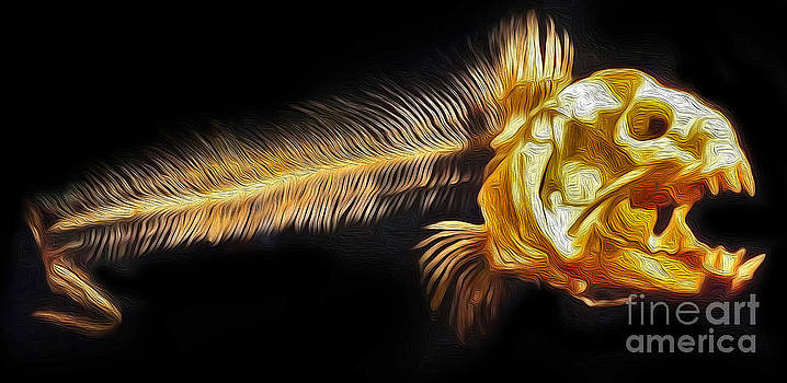Gregory Dyer - Monterey Bay Aquarium - Fish Bones - 05