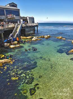 Gregory Dyer - Monterey Bay Aquarium