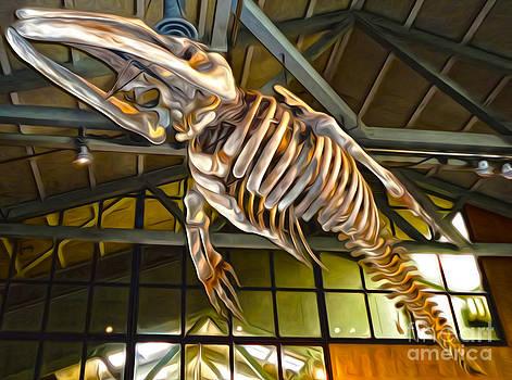 Gregory Dyer - Monterey Bay Aquarium -  Whale Skeleton