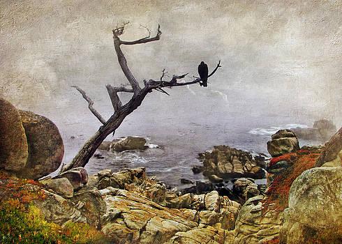 Nikolyn McDonald - Monterey Mist